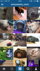 pig owners insta