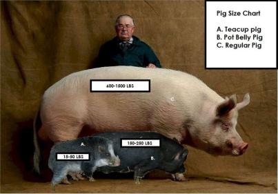 pig-size-chart